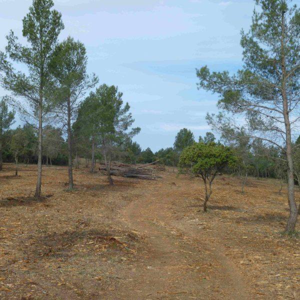 trabajos forestales 4