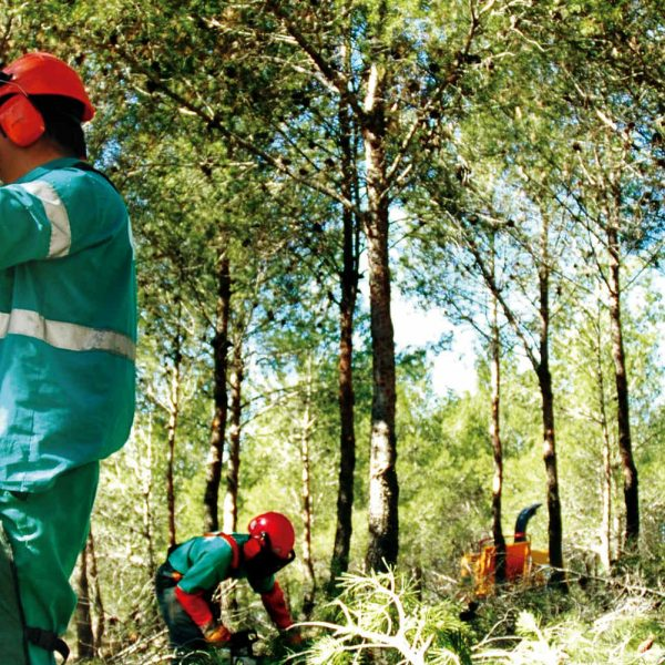 trabajos forestales 1